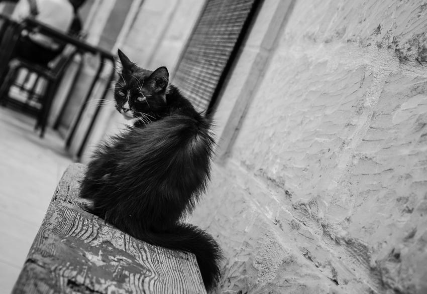 04-Gatto
